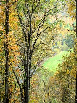 Ashe County Mountain Land for Sale | River House Inn & Restaurant